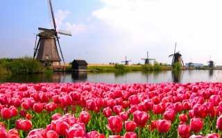 Как правильно заполнить анкету на визу в Нидерланды?