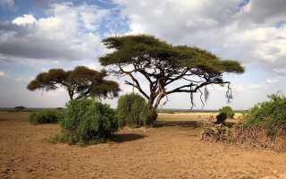 Кенийская виза в 2019 году