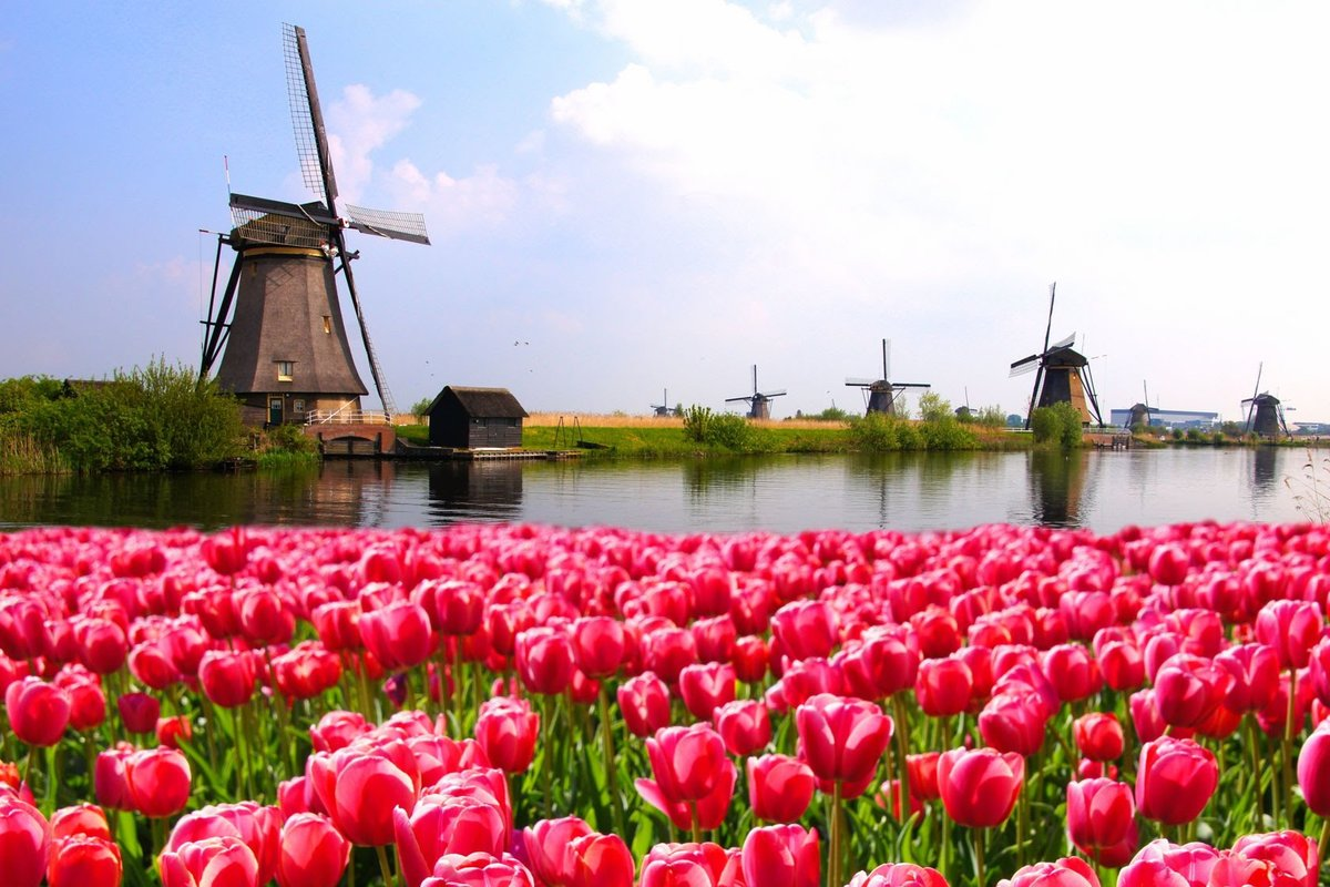Как правильно заполнить анкету на визу в Нидерланды